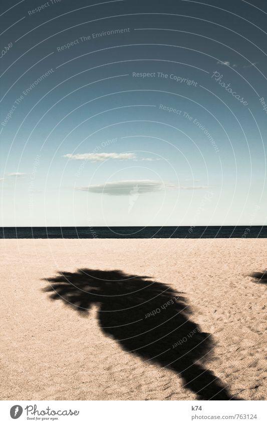 gestrandet Landschaft Urelemente Sand Luft Wasser Himmel Horizont Pflanze Baum exotisch Palme Küste Strand Meer frei hell Wärme blau ruhig Hoffnung demütig