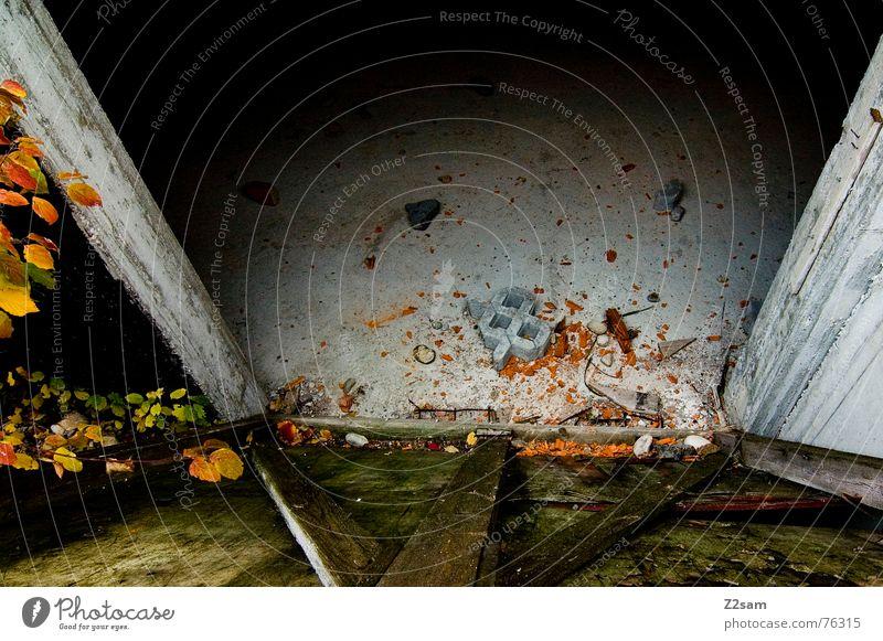 Kellerblick Blatt Herbst gelb rot kaputt Holz Haus Ruine kellblick Farbe orange Stein trashig dreckig Tor Tür Schatten alt