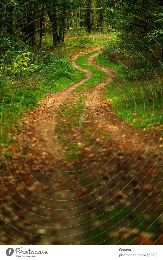 Waldspaziergang Forstweg Fahrbahn Reifenspuren Baum Gras Blatt Herbst Natur Wege & Pfade Straße Kurve Kreis long and winding road