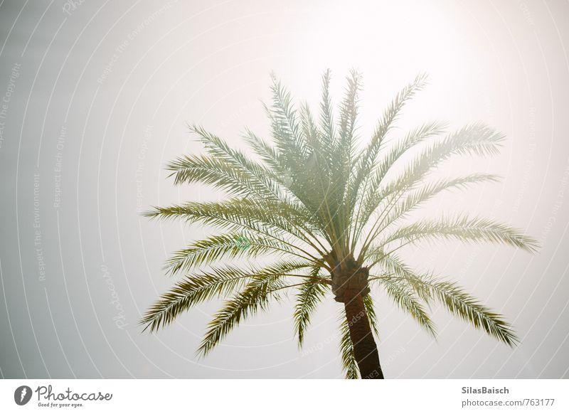 Willkommen Sommer Natur Sonne Sonnenlicht exotisch Palme Garten Park Wärme Sommerurlaub Ferien & Urlaub & Reisen Farbfoto Menschenleer Tag Licht