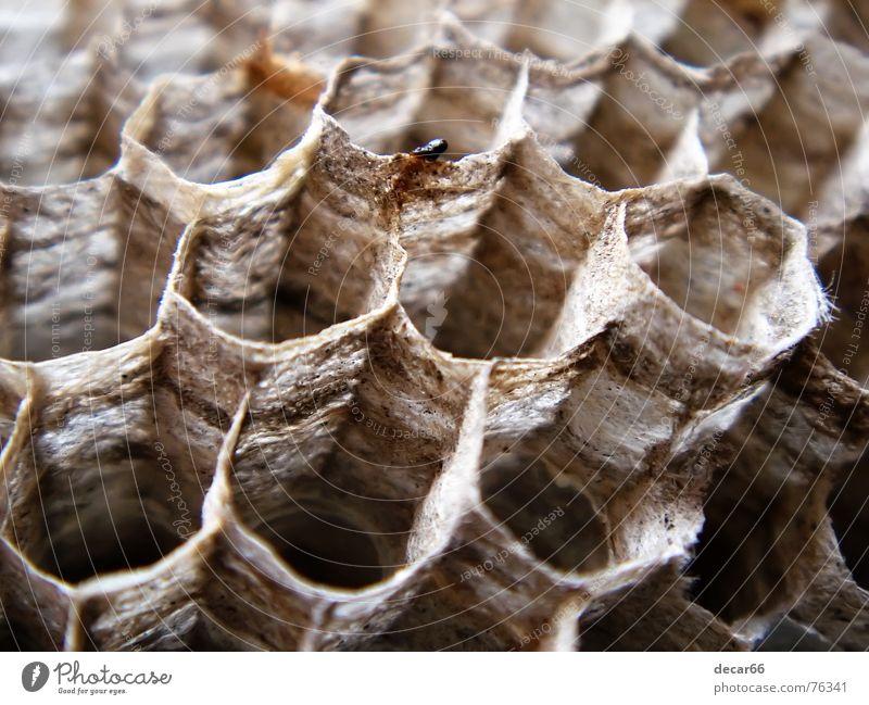 The hive Angst Lifestyle gruselig Panik Nest Terror