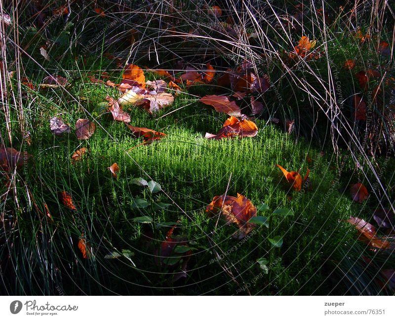 Moos mit Lichtblick Farbfoto Außenaufnahme Menschenleer Dämmerung Zentralperspektive Garten Ostern Herbst Gras Blatt Park Wiese Wald Küste grün Vertrauen