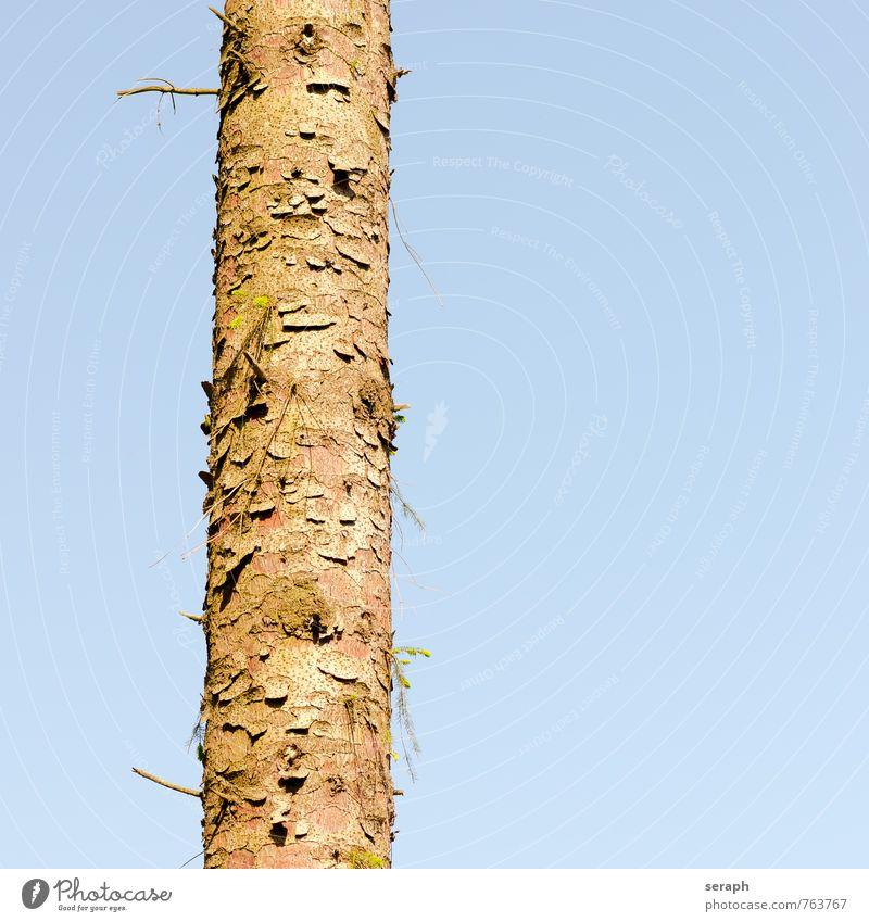 Baumstamm Wald fir Konifere Holz Pflanze Natur Umwelt Immergrün Kiefer stem Nadelbaum Nadelwald Tannennadel Kiefernnadeln Glatze Baumrinde Kruste Muster