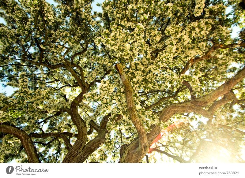 Baum Ast Zweig Sträucher Blühend Blüte hell blenden grell Morgen Sonnenstrahlen Licht Pflanze Wachstum Allee Strukturen & Formen Ordnung Hintergrundbild unruhig