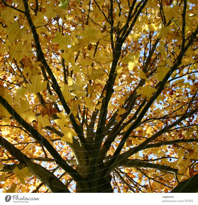 ein Baum nimmt Abschied Blatt gelb Herbst Stimmung braun Ast Jahreszeiten Baumstamm Neuanfang Erleichterung