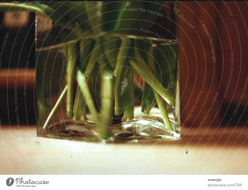 stulpentiele Wasser Glas grün und stiele