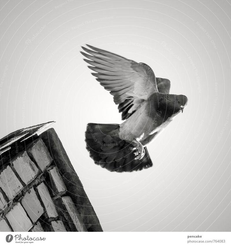 angelo Himmel Natur Tier fliegen Vogel Flügel Zeichen Urelemente Engel Altstadt Taube Schwarzweißfoto Dach Dachfirst