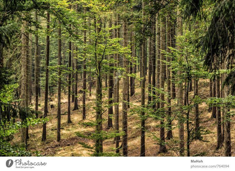 Wald Natur Landschaft Baum Menschenleer natürlich braun grün Vertrauen träumen Zufriedenheit entdecken Erholung Freizeit & Hobby Freude gleich ruhig Farbfoto