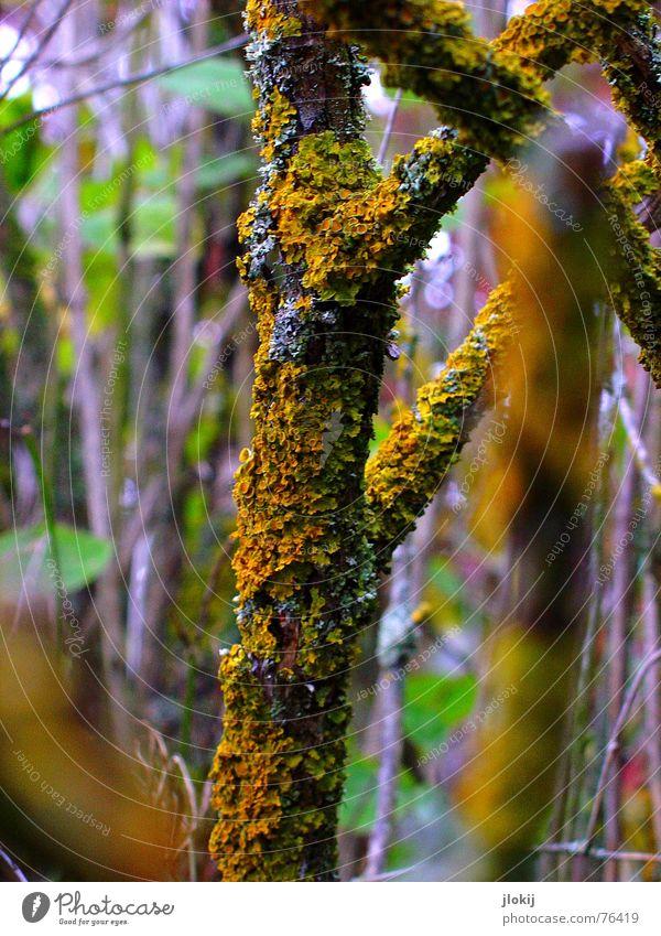 2 Minuten Wärme Natur Baum Pflanze Winter Blatt Wald Holz Wärme orange Wachstum Sträucher violett Ast Pilz Zweig heizen