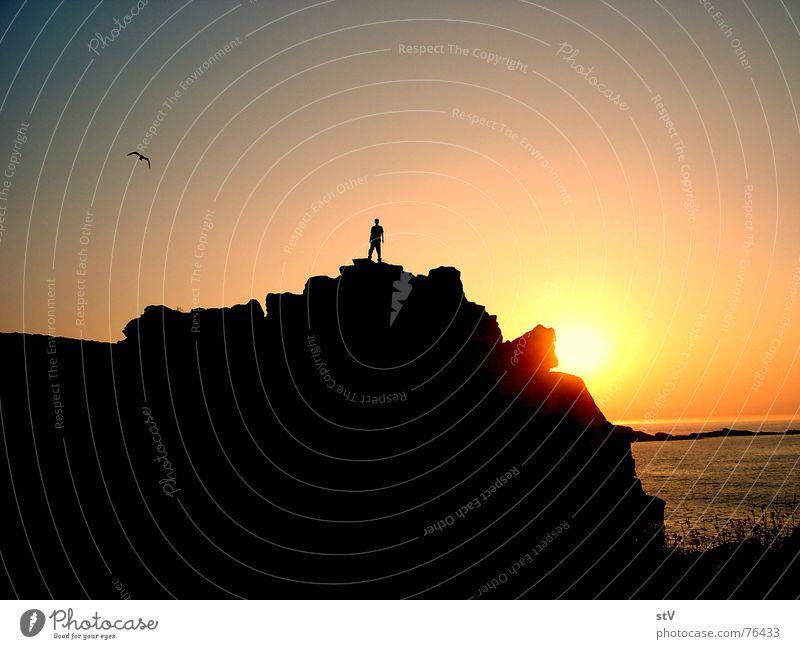 Englischer Felsen Sonne Meer dunkel Gras Freiheit hell Vogel Wellen Felsen Möwe steinig