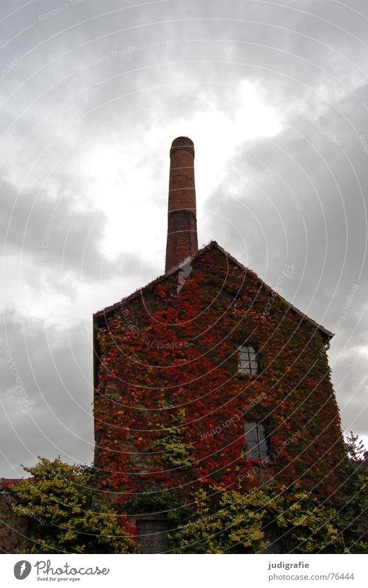 Kornbrennerei Haus Gebäude Spirituosen Backstein Wolken Herbst Blatt bewachsen Fenster Dorf Degersen historisch Industrie kornbrennerei Schornstein alt Alkohol