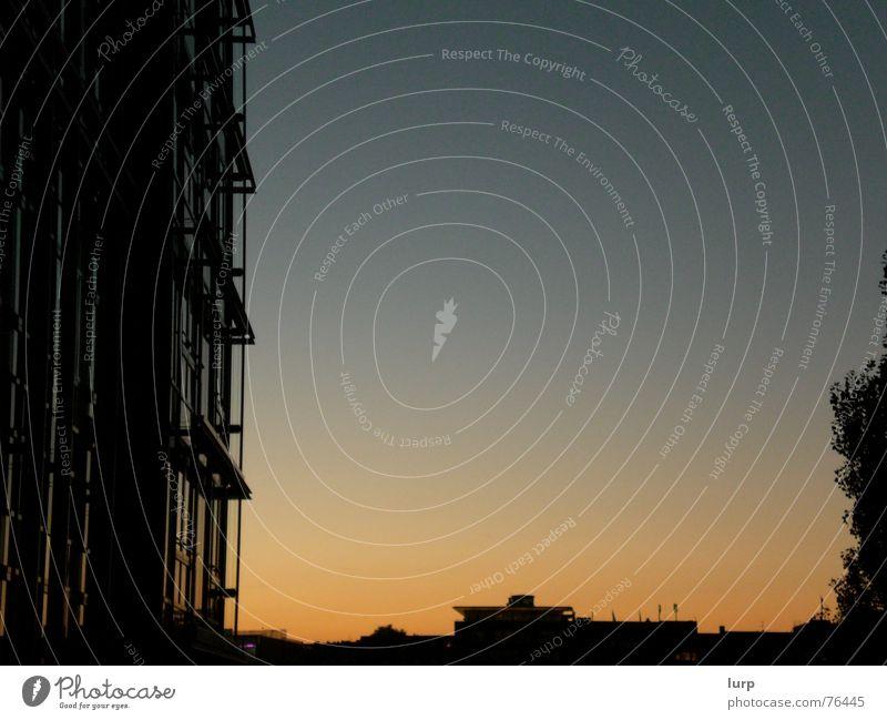 orange citylight Wirtschaft Himmel Wolkenloser Himmel Nachthimmel Schönes Wetter Baum Sträucher Stadt Hauptstadt Hafenstadt Skyline Menschenleer Haus Hochhaus