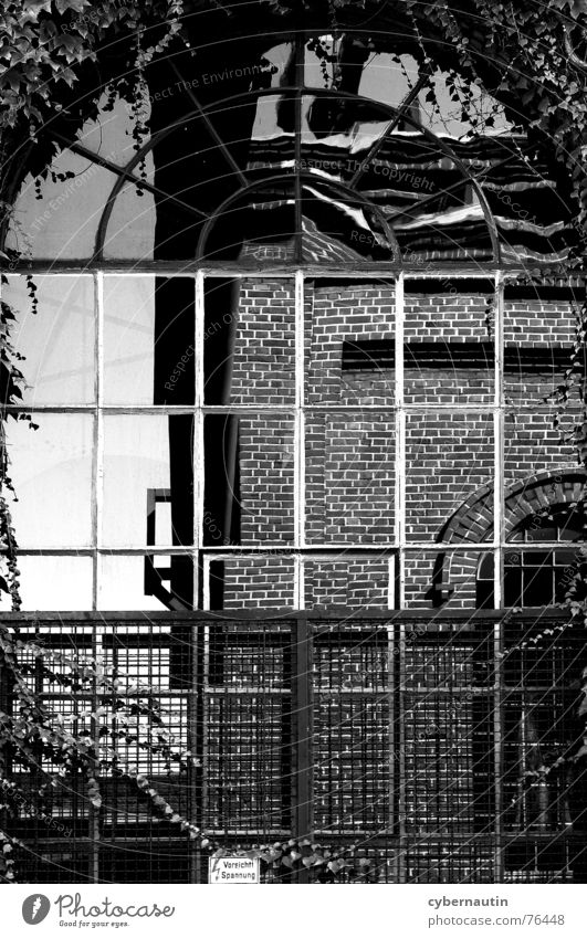 Industrieromantik Gebäude Bergbau Fenster Leitersprosse Stahl Backstein Fassade Efeu Reflexion & Spiegelung Romantik Industriefotografie Vergangenheit Glas