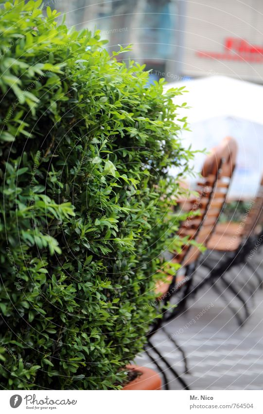 straßencafé Ferien & Urlaub & Reisen Sommer Garten Dekoration & Verzierung Stuhl Pflanze Sträucher Grünpflanze grün Frühlingsgefühle Café Biergarten Buchsbaum