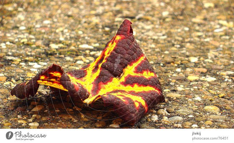 ...in Gedenken an die Gefallenen Blatt Gefäße Herbst rot gelb braun Bürgersteig unten Ordnung fade Rotwein Jahreszeiten Vergänglichkeit leaf Straße street