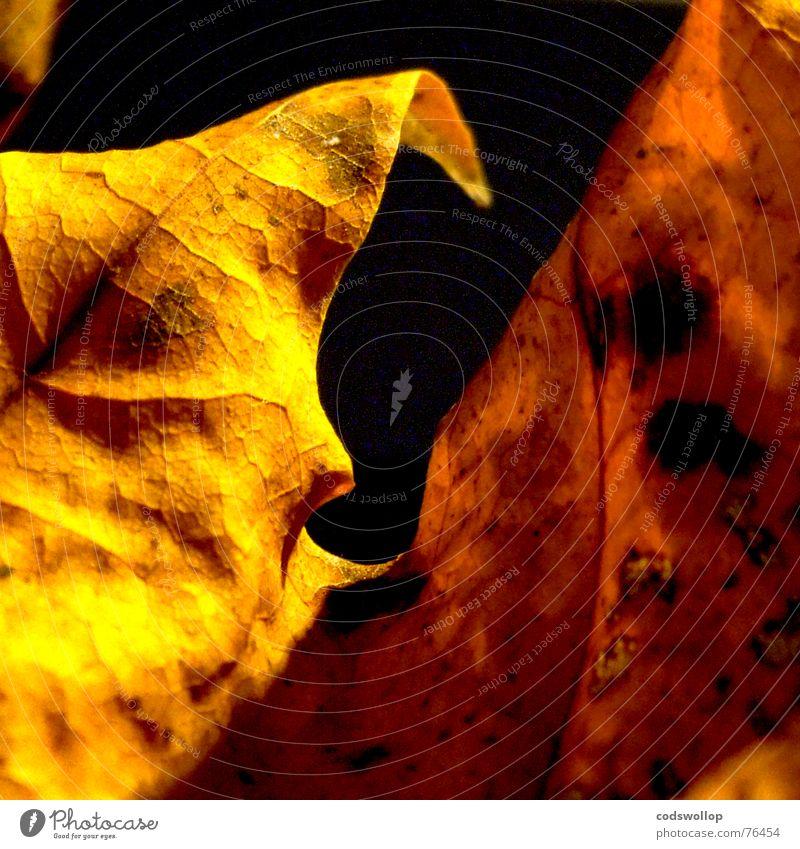 golden brown rot Blatt schwarz gelb Herbst gold Laubbaum Bronze