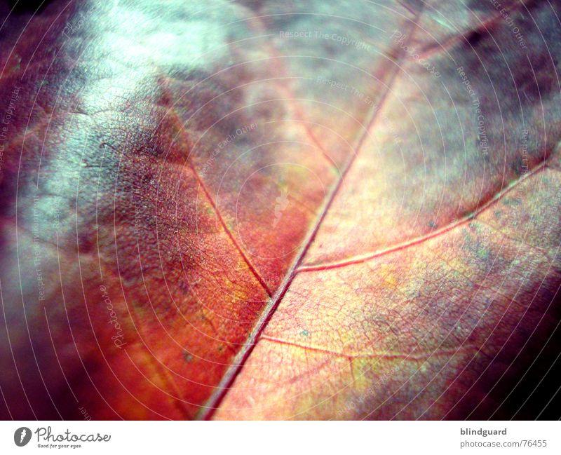 Herbstmode .:!!!:. Blatt Gefäße rot Tod stoßen Physik fein trocken welk Geäst Ahorn gelb grün autumn leaf Loch Sonne Wärme Wind abgefallen red getrocknet