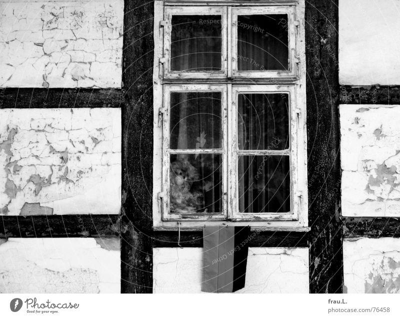 kleiner Affe Fachwerkfassade Fachwerkhaus Affen Stofftiere verwohnt Sprossenfenster Fenster vergessen abblättern Dorf Niedersachsen Haus Fensterscheibe