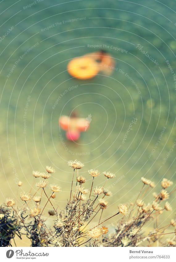 Badende Schwimmen & Baden Schwache Tiefenschärfe Blume Meer Strand Ferien & Urlaub & Reisen Schwimmhilfe Sommer Wärme Sonne Blüte grün gelb orange