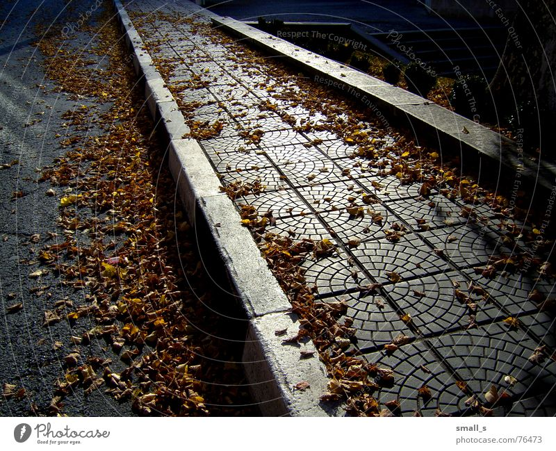 Now i feel the autumn... gelb paving-stone pavement leaves late street sun