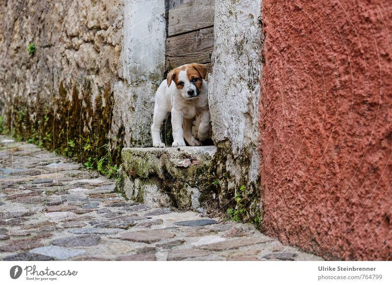 Keiner zu Hause? Hund Einsamkeit Haus Tier Tierjunges Wand Straße Mauer klein gehen Treppe Tür stehen beobachten niedlich Suche
