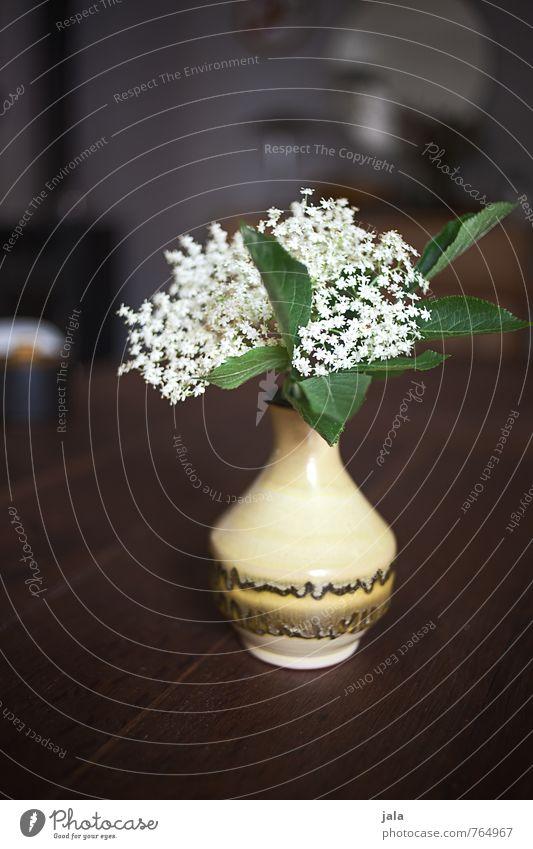 holunder Tisch Holztisch Pflanze Blume Blatt Blüte Nutzpflanze Hollunder Holunderbusch Holunderblüte Vase ästhetisch natürlich schön Farbfoto Innenaufnahme