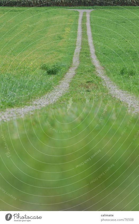 - greenway - Natur Straße Wiese Wege & Pfade Feld Landwirtschaft Mischung Kies krabbeln Landweg