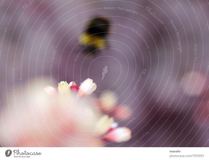 Abflug Natur Pflanze Blume Tier Gefühle Blüte Garten Fliege violett Flugzeugstart Biene Hummel