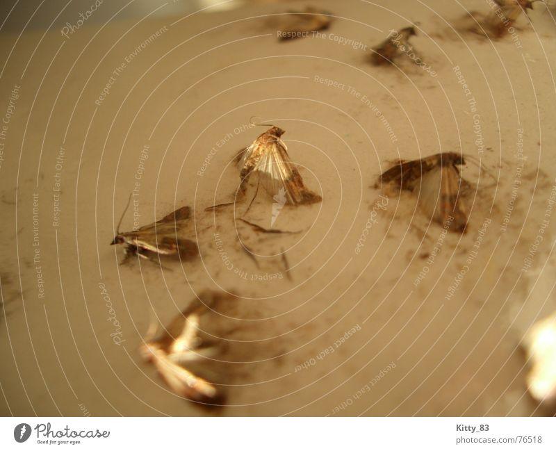 Überlebenskampf Tod braun Flügel kämpfen beige Fühler Plage Schmetterling Klebrig Heterocera
