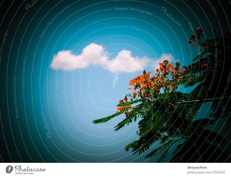 Cumulus Himmel Natur blau grün weiß Sommer ruhig Wolken Stil Holz außergewöhnlich Freizeit & Hobby orange ästhetisch Ausflug Schönes Wetter