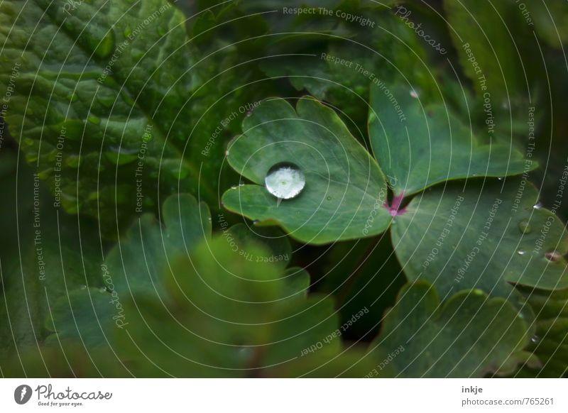einer Natur Pflanze Wasser Wassertropfen Frühling Sommer Blatt Garten liegen ästhetisch einfach frisch nah natürlich rund saftig grün Wachstum
