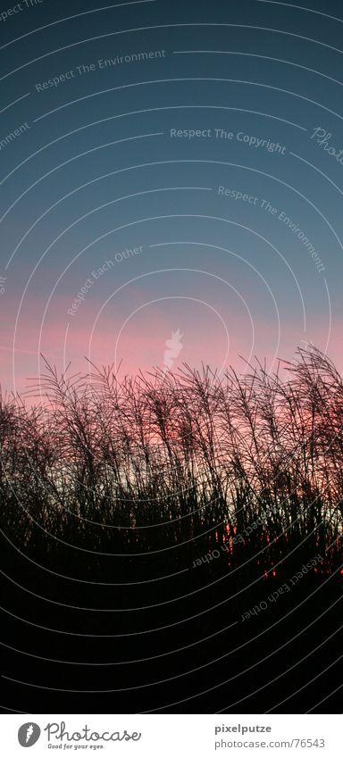 schöne neue welt Gras Verlauf Gegenlicht leicht Stimmung Abenddämmerung ruhig Wolken Wiese Feld Pflanze Wind Himmel Natur pixelputze