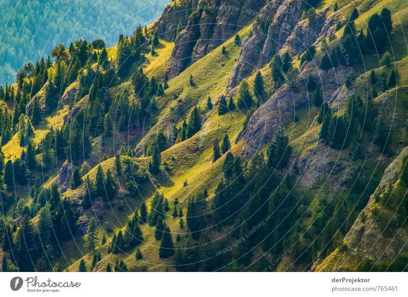 Miniaturwald Natur Ferien & Urlaub & Reisen Pflanze Sommer Baum Landschaft Ferne kalt Wald Umwelt Berge u. Gebirge Gefühle Freiheit außergewöhnlich Felsen