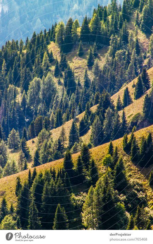 Wald – soweit das Auge reicht Umwelt Natur Landschaft Pflanze Urelemente Sommer Schönes Wetter Baum Urwald Hügel Felsen Alpen Berge u. Gebirge braun gold grün