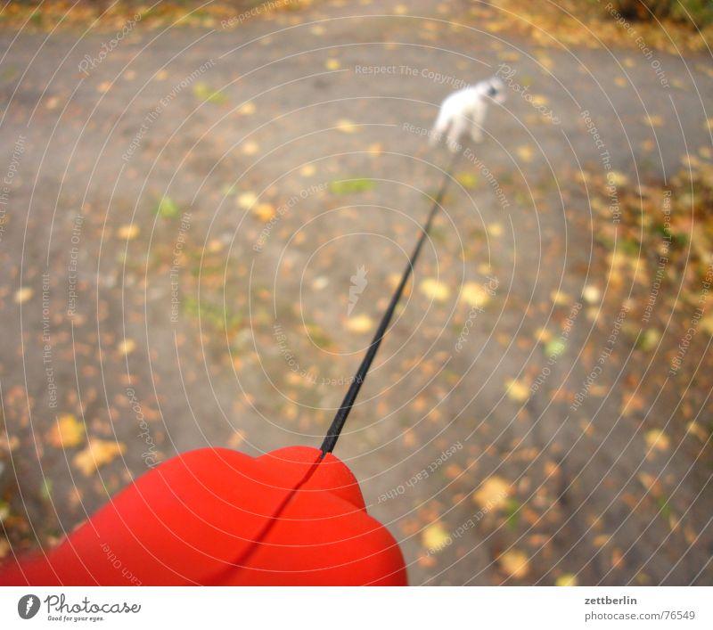 Hund Welpe Terrier klein winzig angeleint Spaziergang Park Herbst Blatt gassi Seil Freiheit frahahahahait Hundeleine