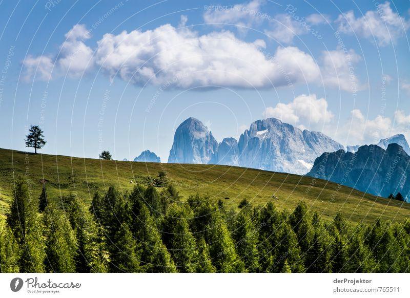 Grün-blau-weiß-Dolomiti Natur Ferien & Urlaub & Reisen Pflanze Sommer Baum Landschaft Wolken Wald Umwelt Berge u. Gebirge Gefühle Wiese Gras Felsen Stimmung