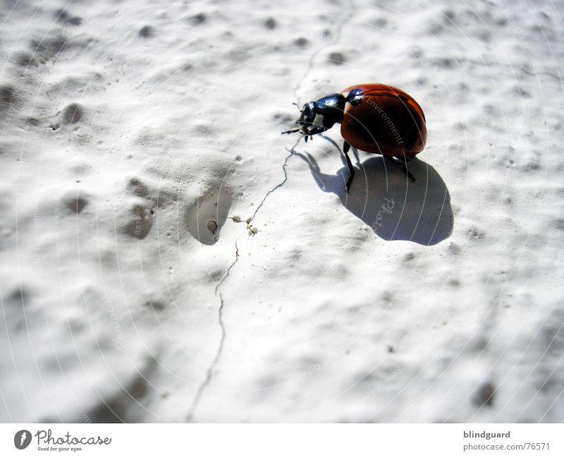 Another Bug On The Wall Sonne rot Farbe Wand Glück Mauer Wärme Beine fliegen Flügel Klettern Insekt Physik Punkt Riss 6