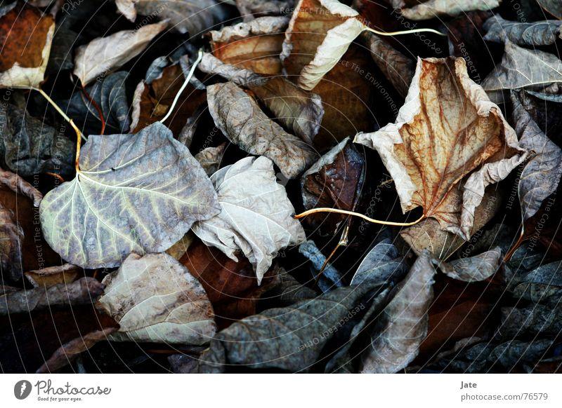 *** Blatt Herbst nah mehrfarbig Ende leaves hell Makroaufnahme