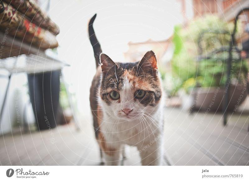katzel Pflanze Topfpflanze Terrasse Tier Haustier Katze 1 Neugier Angst Schüchternheit Farbfoto Außenaufnahme Menschenleer Tag Blick Blick in die Kamera