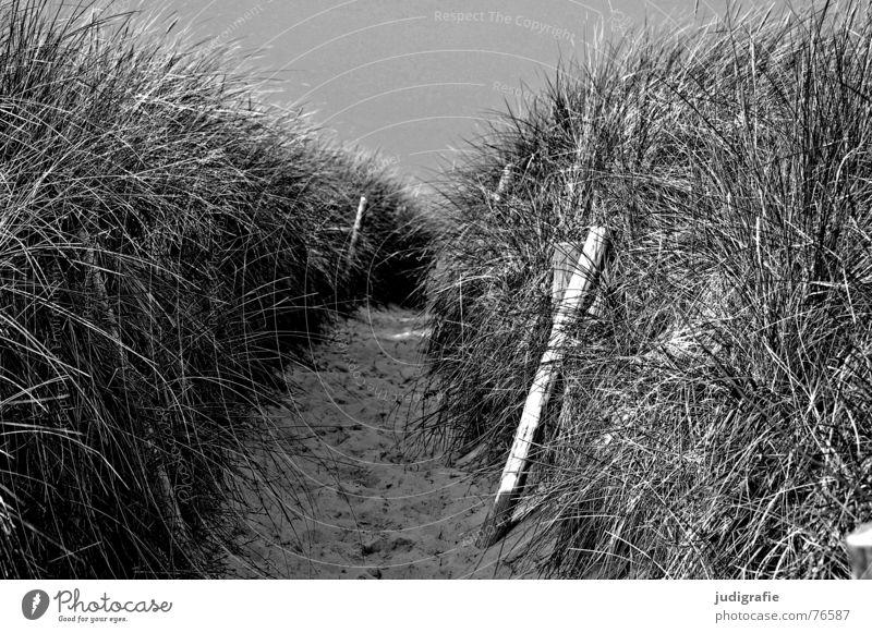 Und dahinter ist das Meer. Strand Ferien & Urlaub & Reisen schwarz Erholung Gras Holz Wege & Pfade See Grenze Stranddüne Ostsee Weststrand