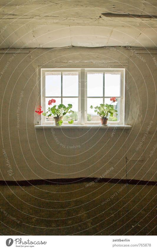 Groß Zicker Haus Raum Innenarchitektur Häusliches Leben Wohnhaus Wohnzimmer Fenster Fensterladen Fensterscheibe Scheibe Glas Aussicht Blumentopf Zimmerpflanze