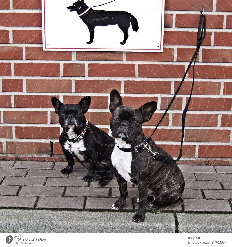 Keine Möpse! Hund Einsamkeit Tier Wand Traurigkeit Gefühle Mauer Stein Stimmung Zusammensein Schilder & Markierungen sitzen warten Hinweisschild Coolness Zeichen