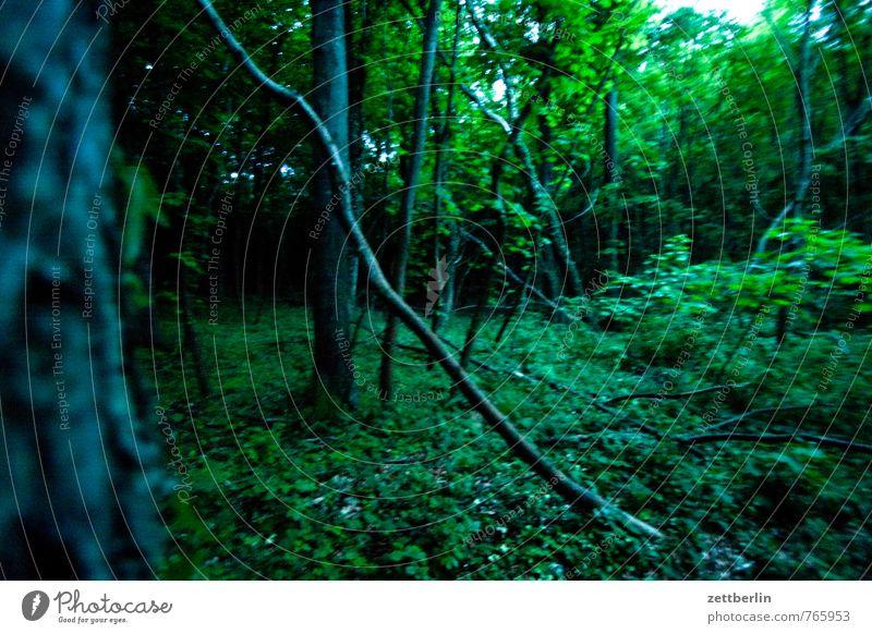 Nordperd Natur Ferien & Urlaub & Reisen Pflanze Sommer Baum Erholung Landschaft Blatt Wald Umwelt Park Freizeit & Hobby Wetter Angst Tourismus Klima