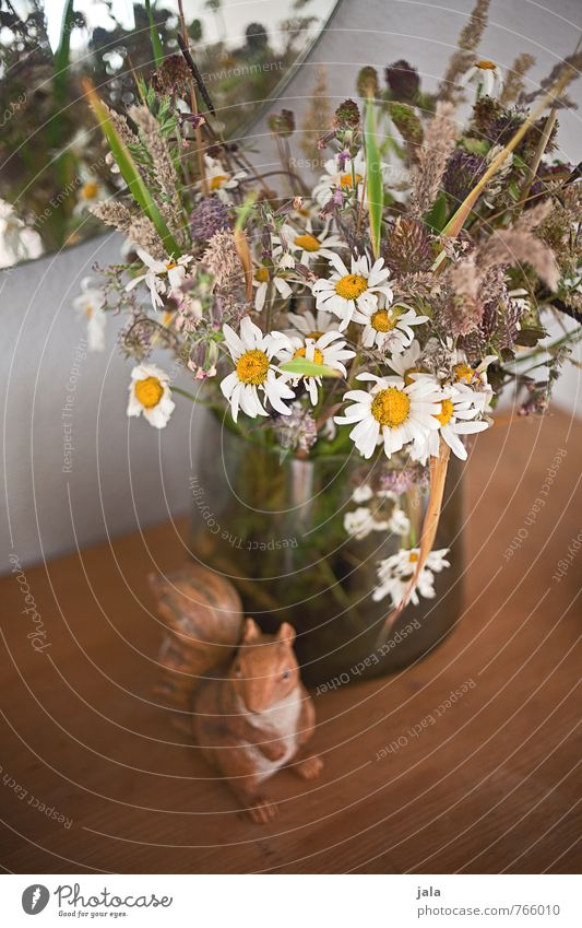 verblüht schön Pflanze Blume Blüte wild ästhetisch Spiegel Blumenstrauß Figur Vase Eichhörnchen verblüht