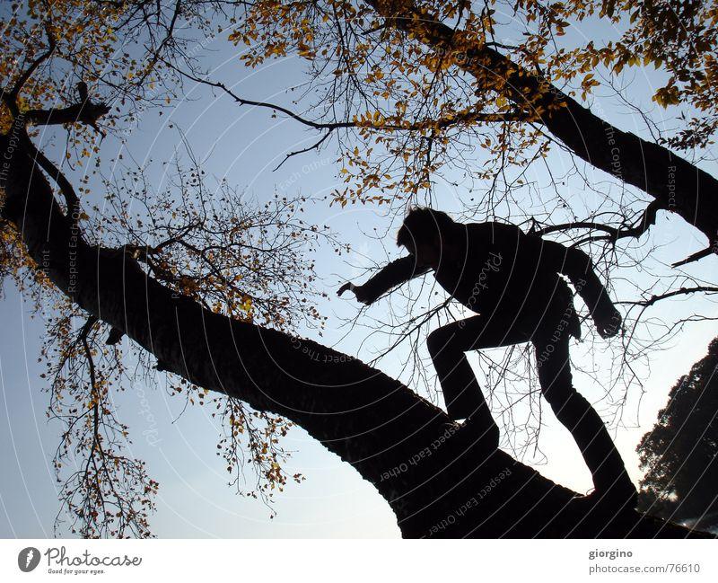 walking on trees Mensch Mann Himmel Baum Wolken gehen Jagd schießen schwierig
