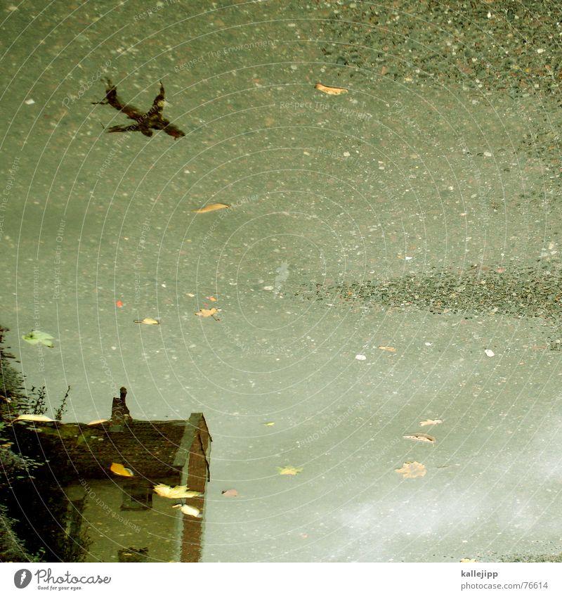 himmel über berlin I Wasser Blatt Haus Herbst Regen nass Flugzeug tief Flugzeuglandung Pfütze UFO Terror Pankow Terrorgefahr Einflugschneise