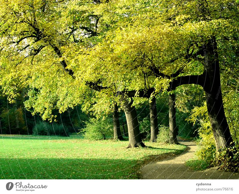 Stadtpark Park Baum Herbst grün gelb Richtung Wiese ruhig Erholung Freizeit & Hobby Reifezeit gepflegt alternativ Garten Natur Wege & Pfade Schatten Sonne Wärme