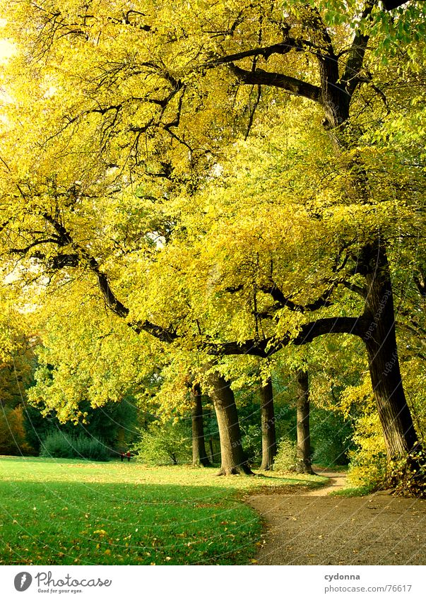 Stadtpark I Natur schön Baum Sonne grün ruhig gelb Erholung Herbst Wiese Garten Wege & Pfade Park Wärme Wachstum Spaziergang