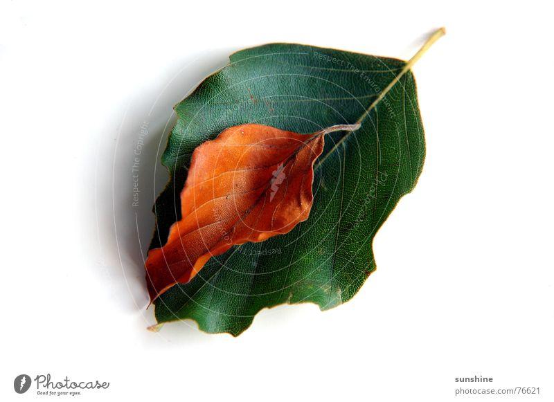 Blatt in Blatt Natur Baum grün Herbst braun 2