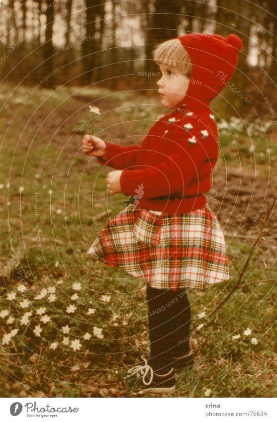 Ein Mädlein steht im Walde - Version 2 Kind Mädchen rot Blume weiß klein Einsamkeit kariert Strumpfhose Rotkäppchen